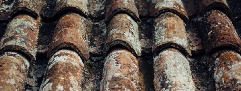 Dach ohne Dachbeschichtung mit Bewuchs auf den Dachpfannen