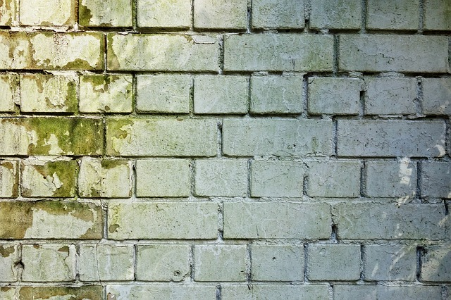 Fassadenfarben gegen Schimmel